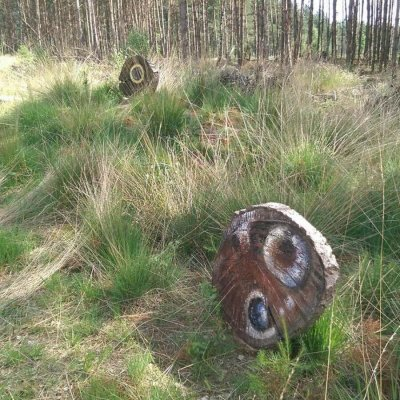 Natuur Begraafplaats 'de Utrecht'