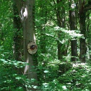 Wouw in het bos