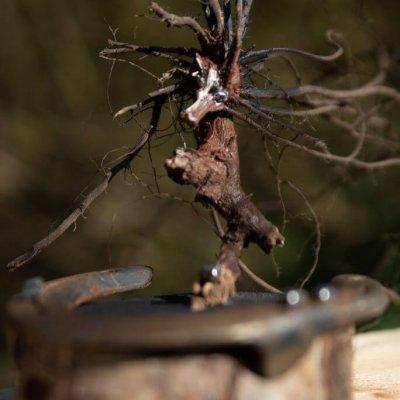 Steigerende knol. Foto: Toon van der Werf