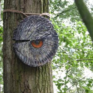 Ogenblik in het bos
