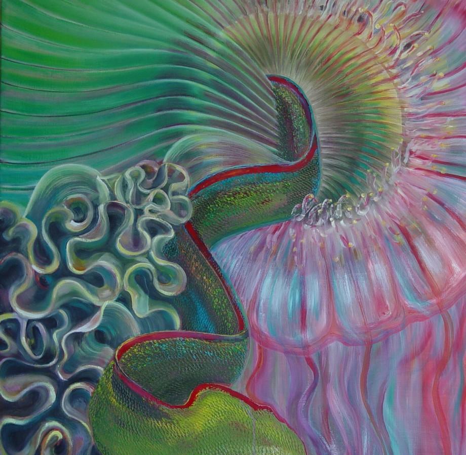 Novia medusa